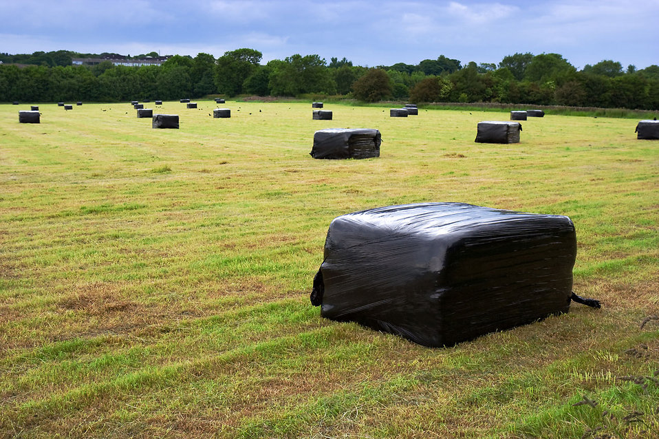 Bales of straw on a field : Free Stock Photo