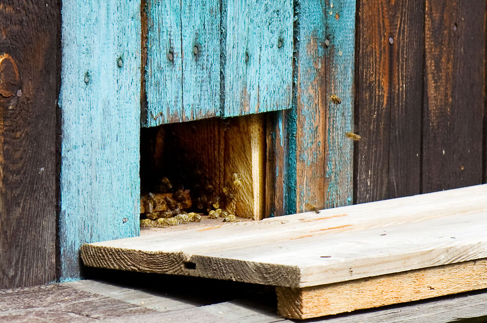 A wooden bee hive : Free Stock Photo