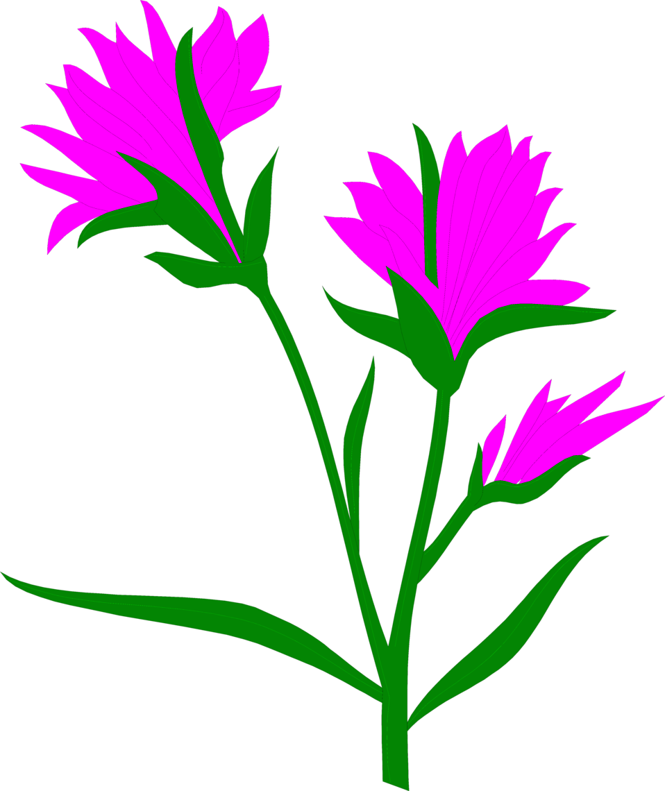 Illustration of purple Indian Paintbrush flowers.
