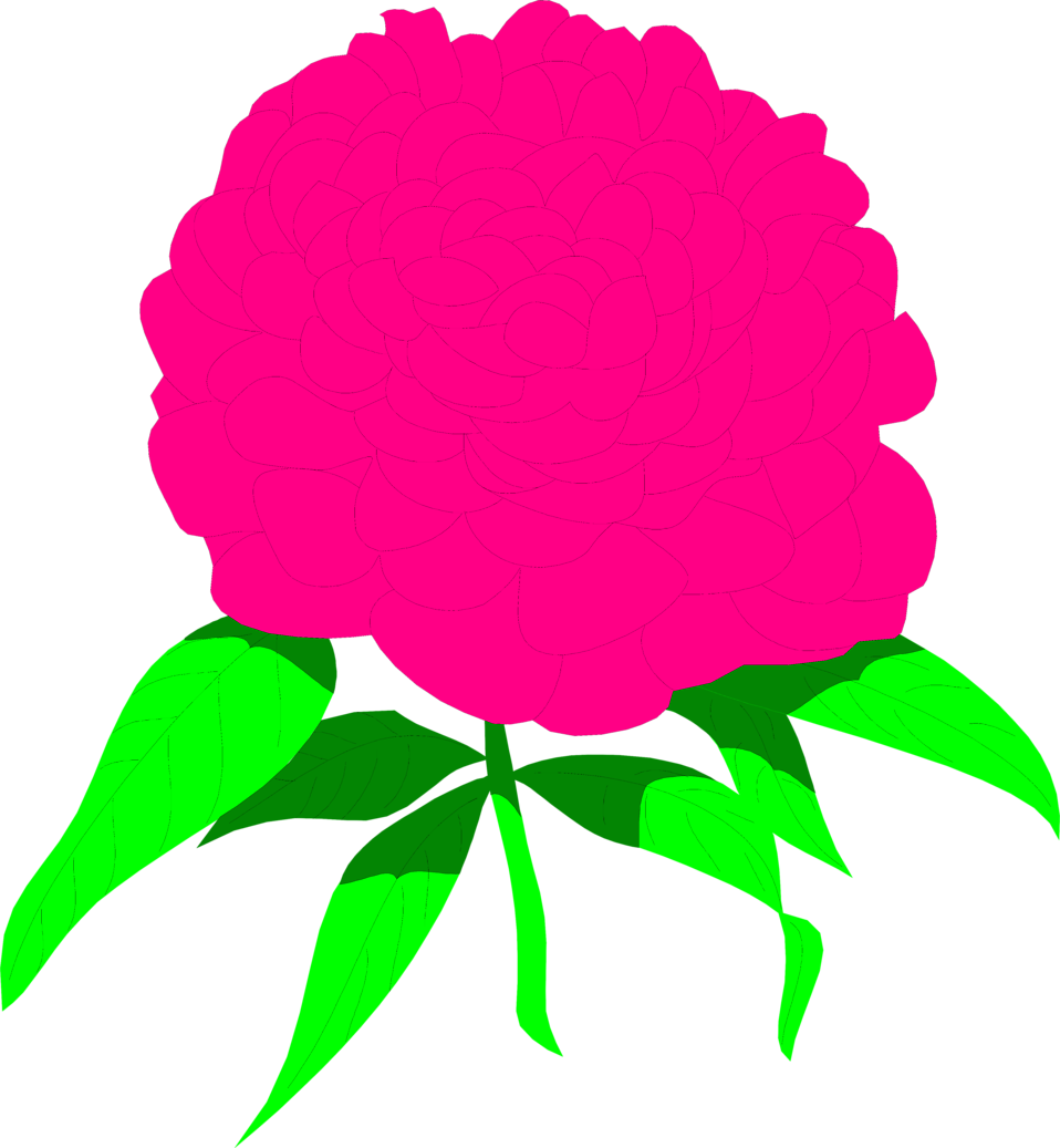Illustration of a pink peony flower : Free Stock Photo