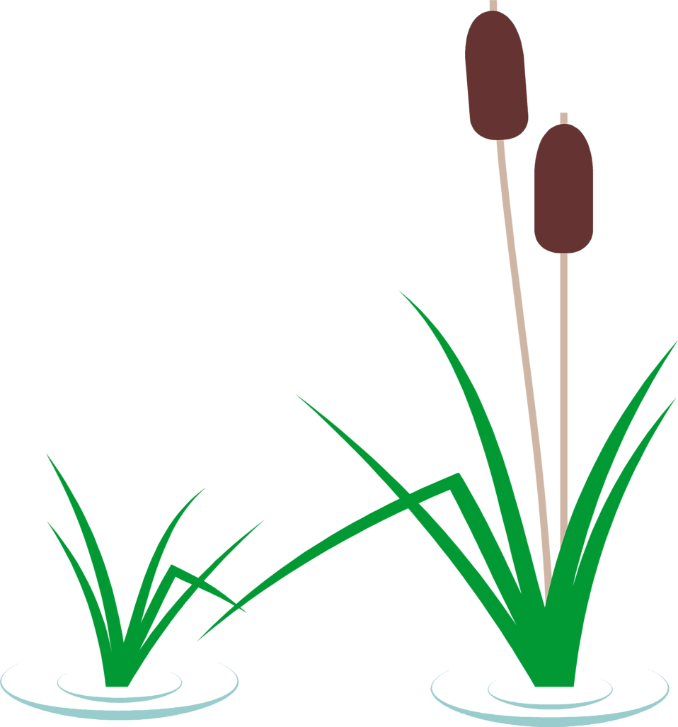 Illustration of reeds in the water with cattails : Free Stock Photo