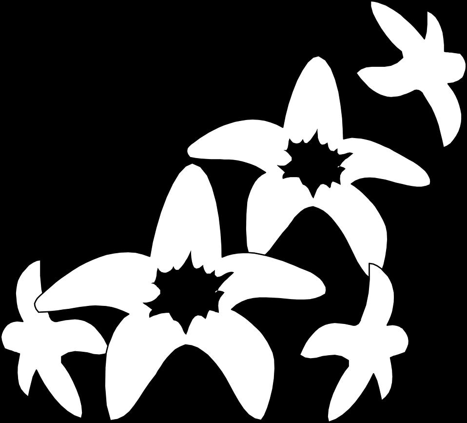 Illustration of white flowers : Free Stock Photo