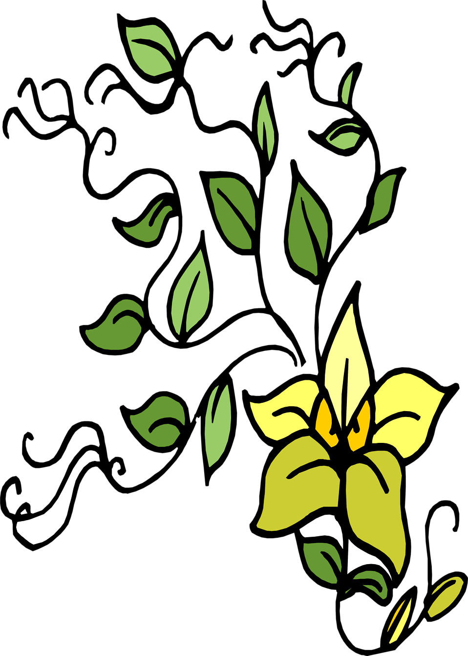 Illustration of a yellow and green flower : Free Stock Photo