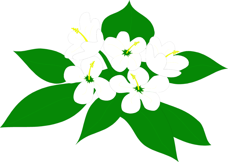Illustration of white flowers : Free Stock Photo