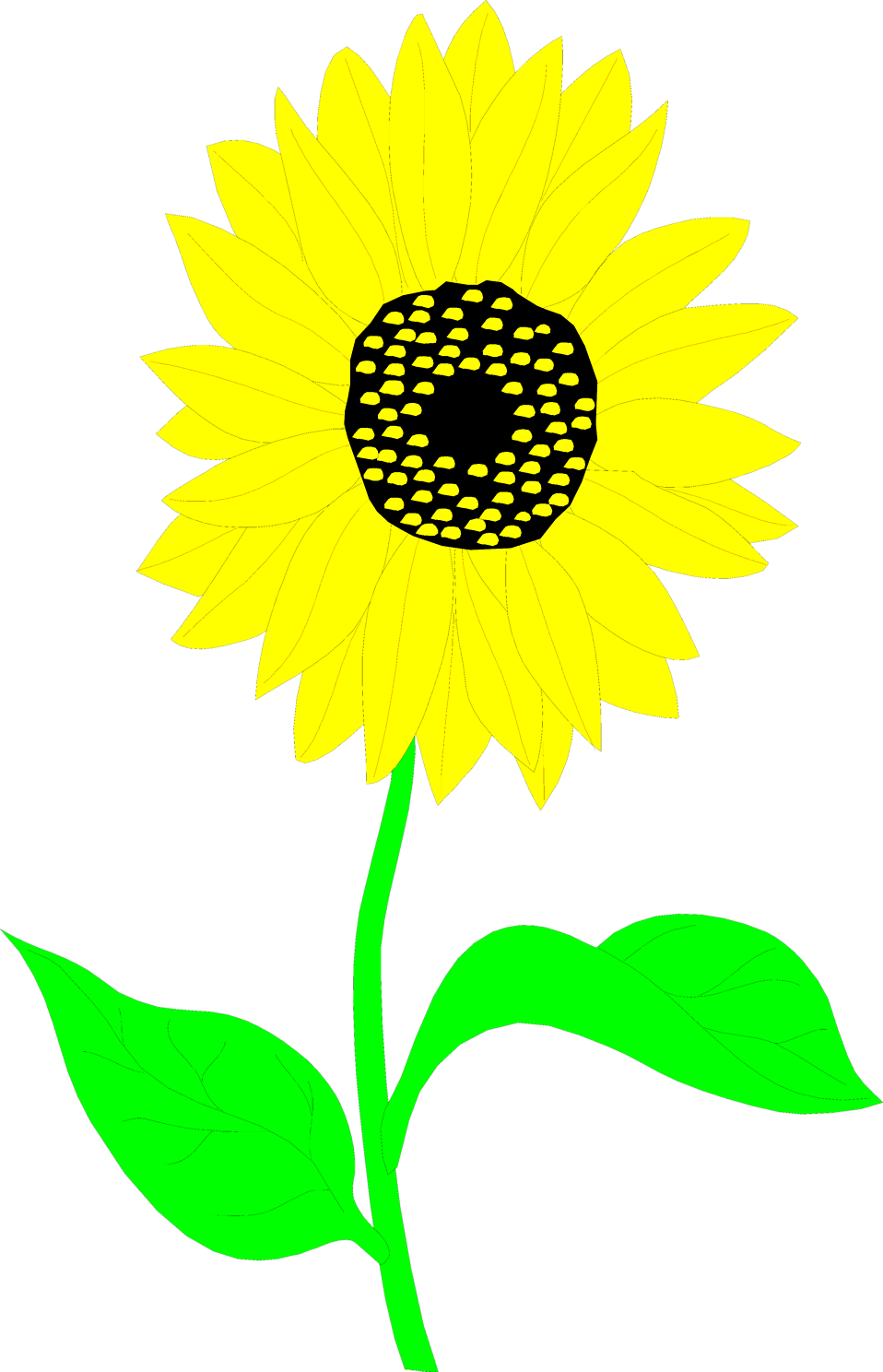 Illustration of a sunflower : Free Stock Photo