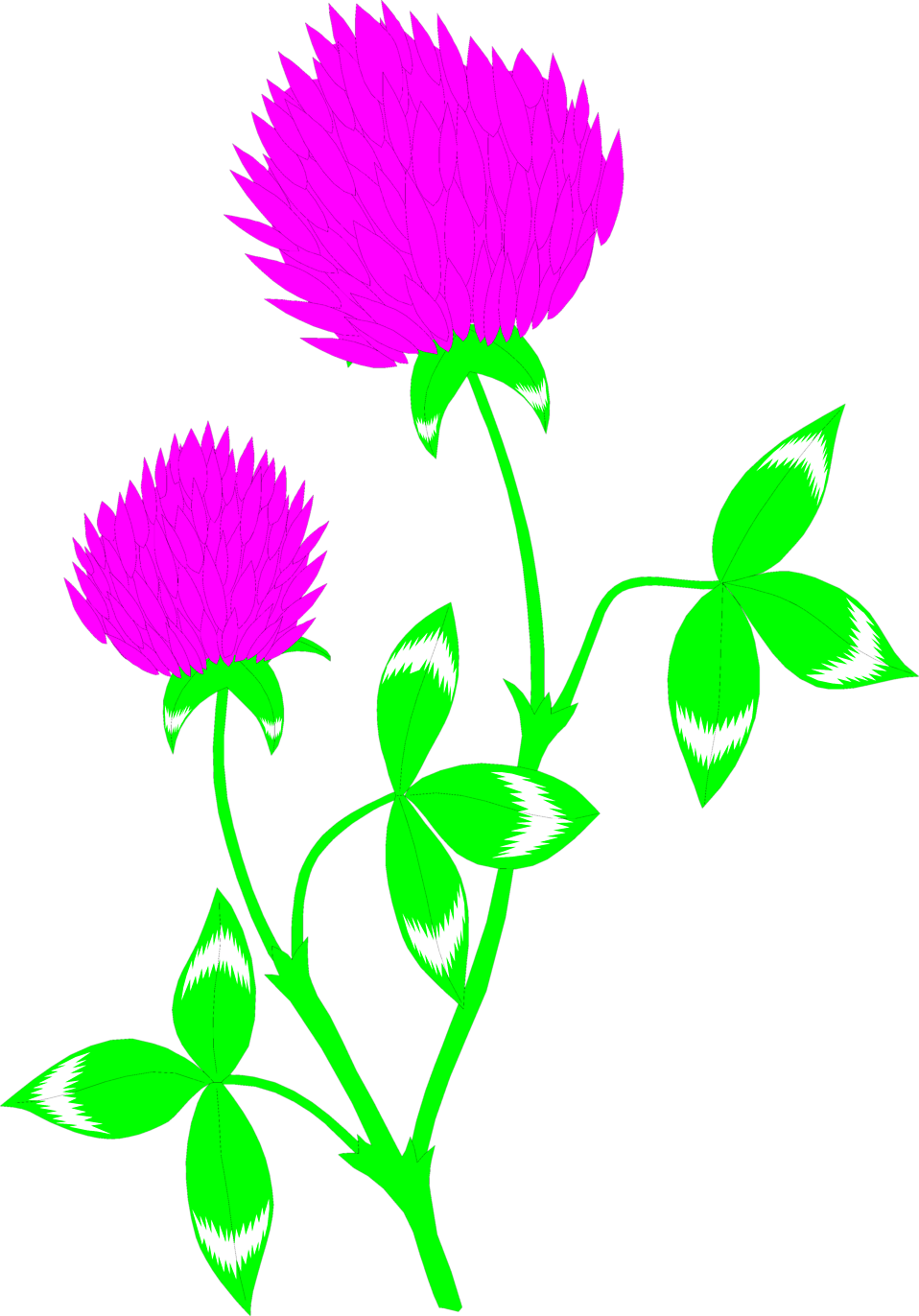 Illustration of a red clover flower : Free Stock Photo