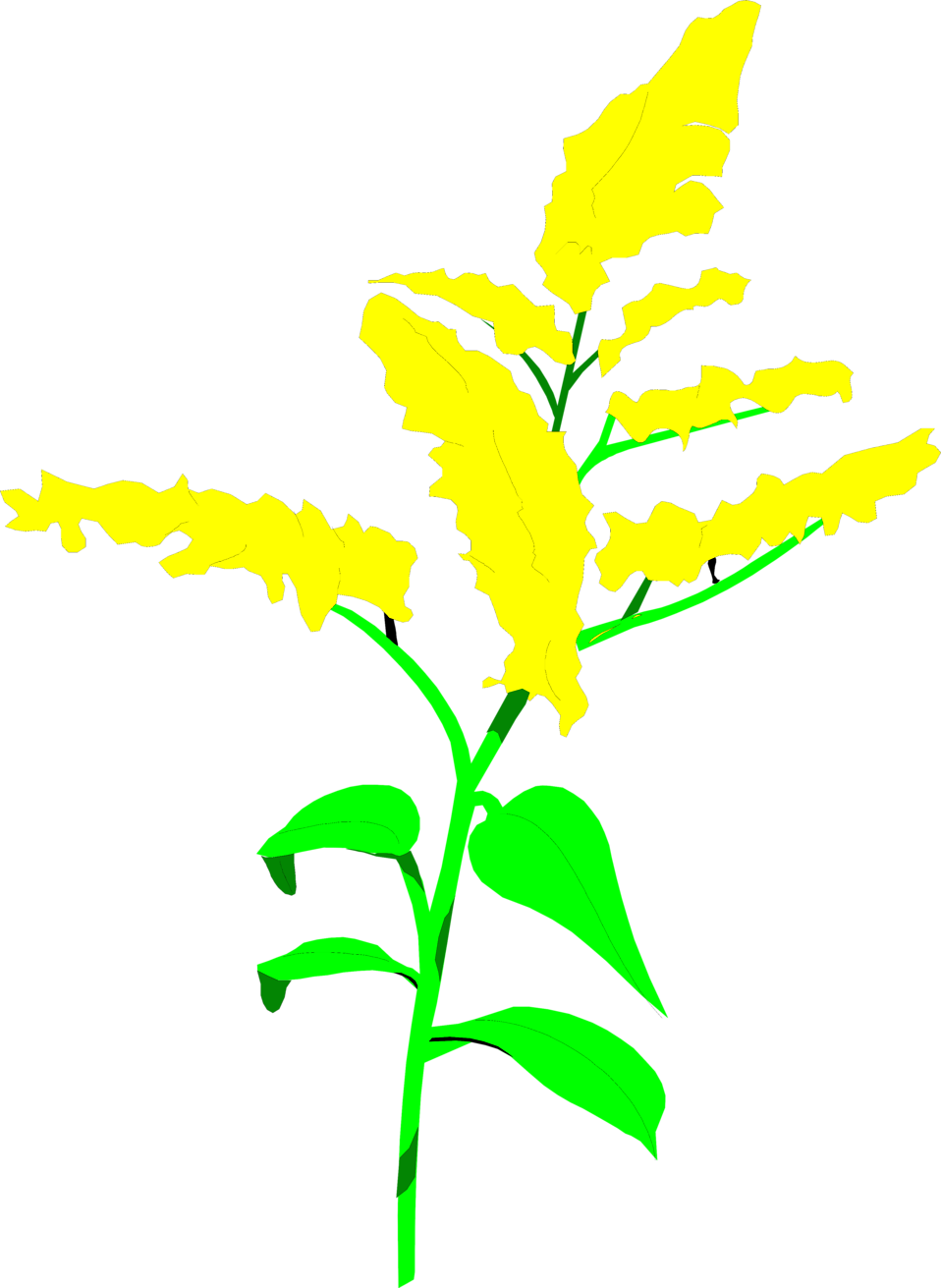 Illustration of yellow goldenrod flowers : Free Stock Photo