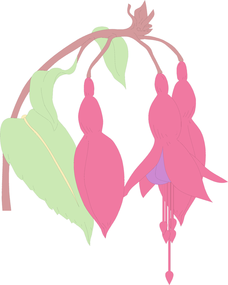 Illustration of pink flowers : Free Stock Photo