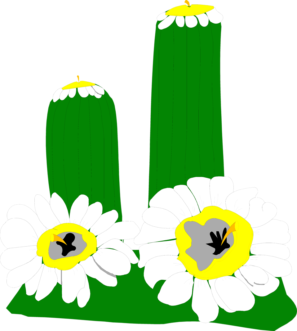 Illustration of a cactus with white flowers : Free Stock Photo