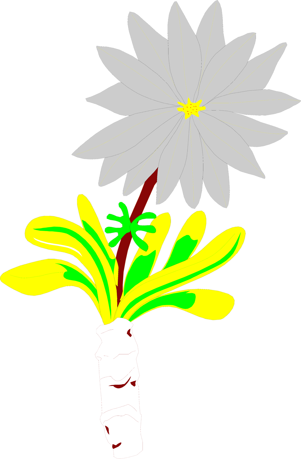 Illustration of a bitterroot flower : Free Stock Photo