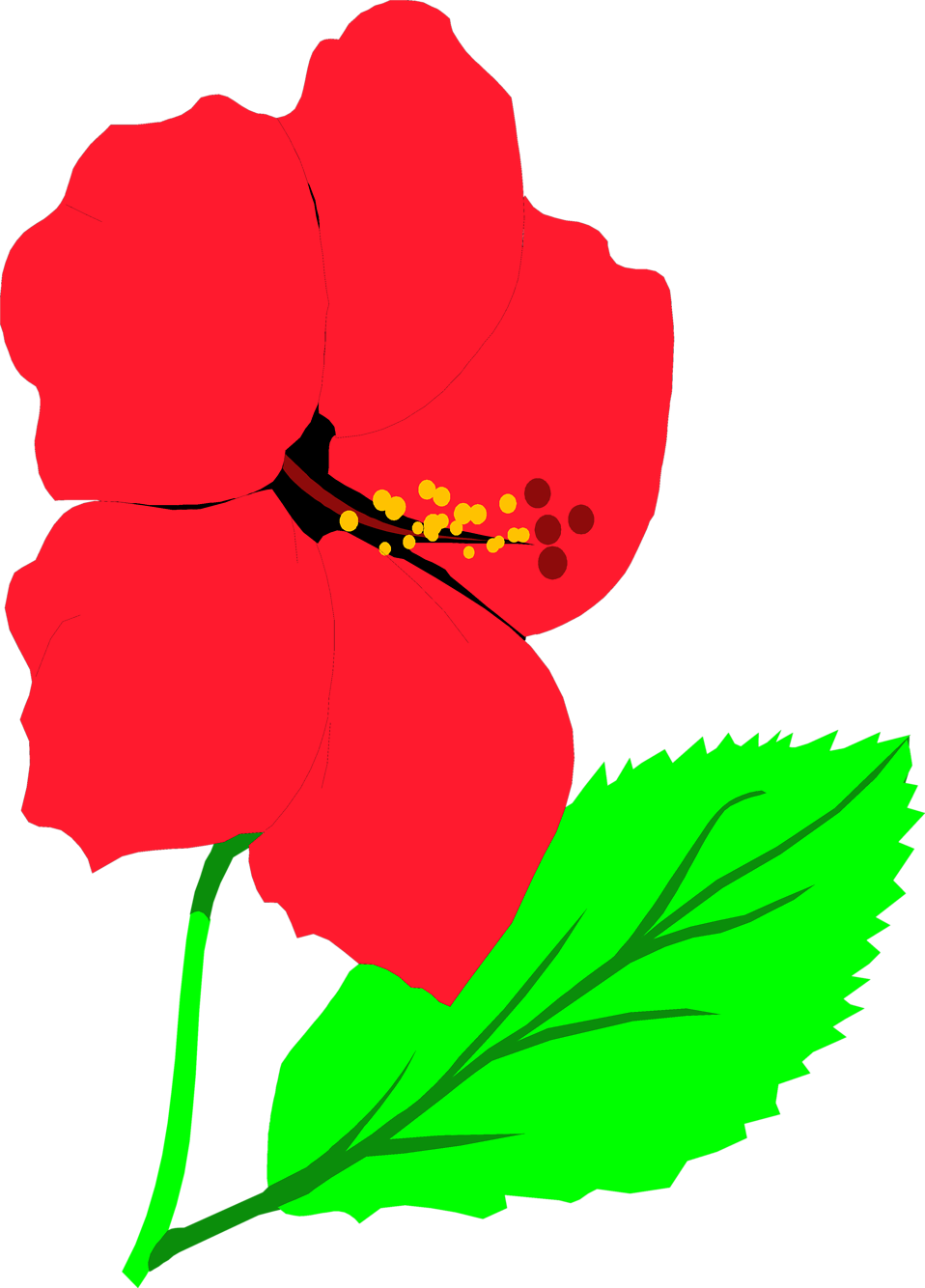 Illustration of a red hibiscus flower : Free Stock Photo