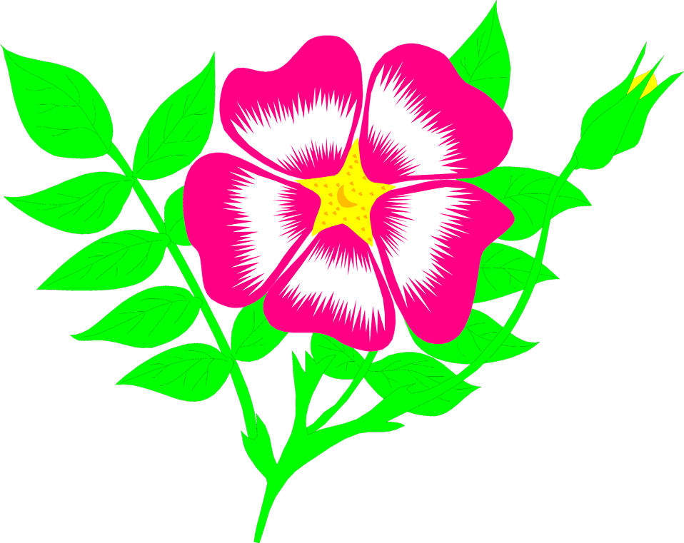 Illustration of a pink flower : Free Stock Photo