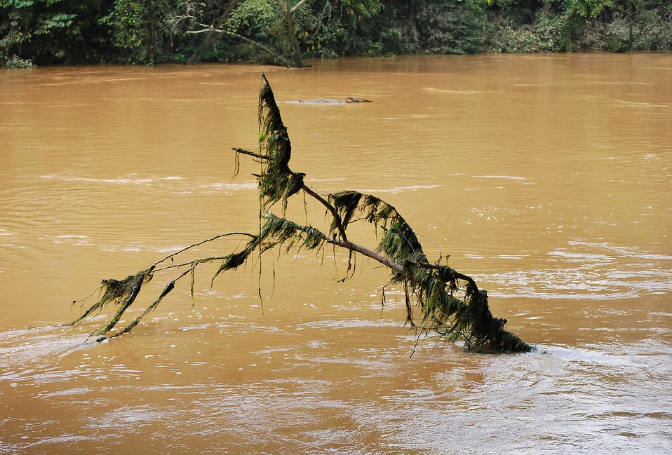 A submerged tree in a flooded river : Free Stock Photo