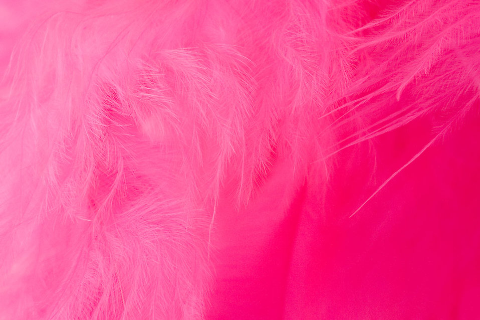 Close-up of a pink feather : Free Stock Photo