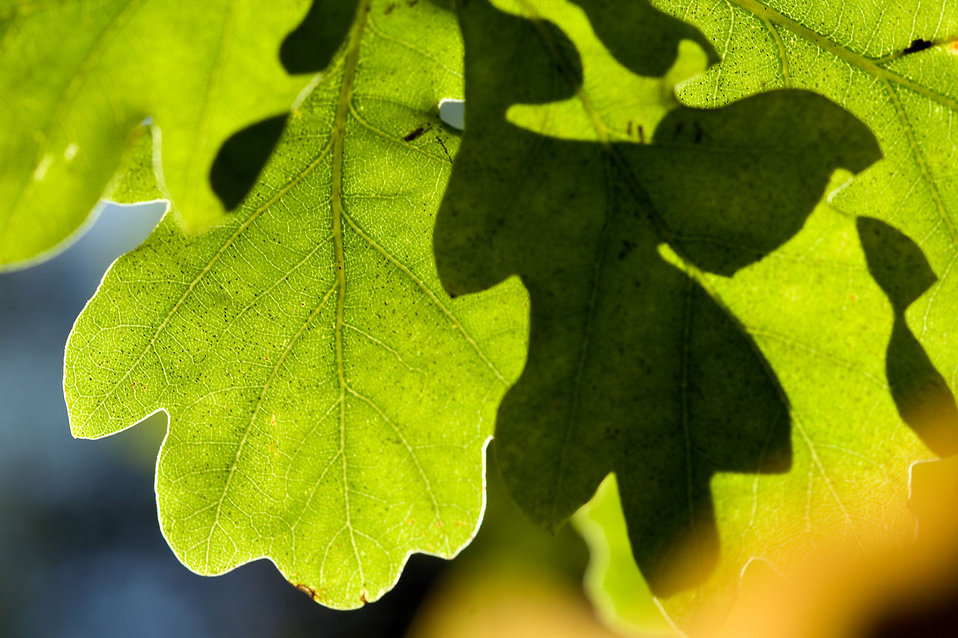 Close-up of green leaves : Free Stock Photo