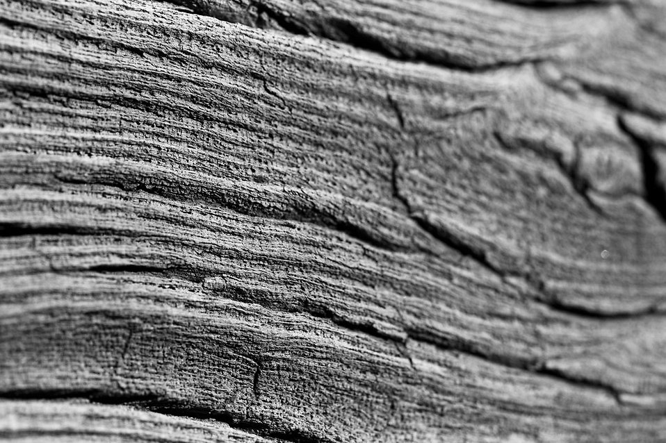 Close-up of a piece of wood : Free Stock Photo