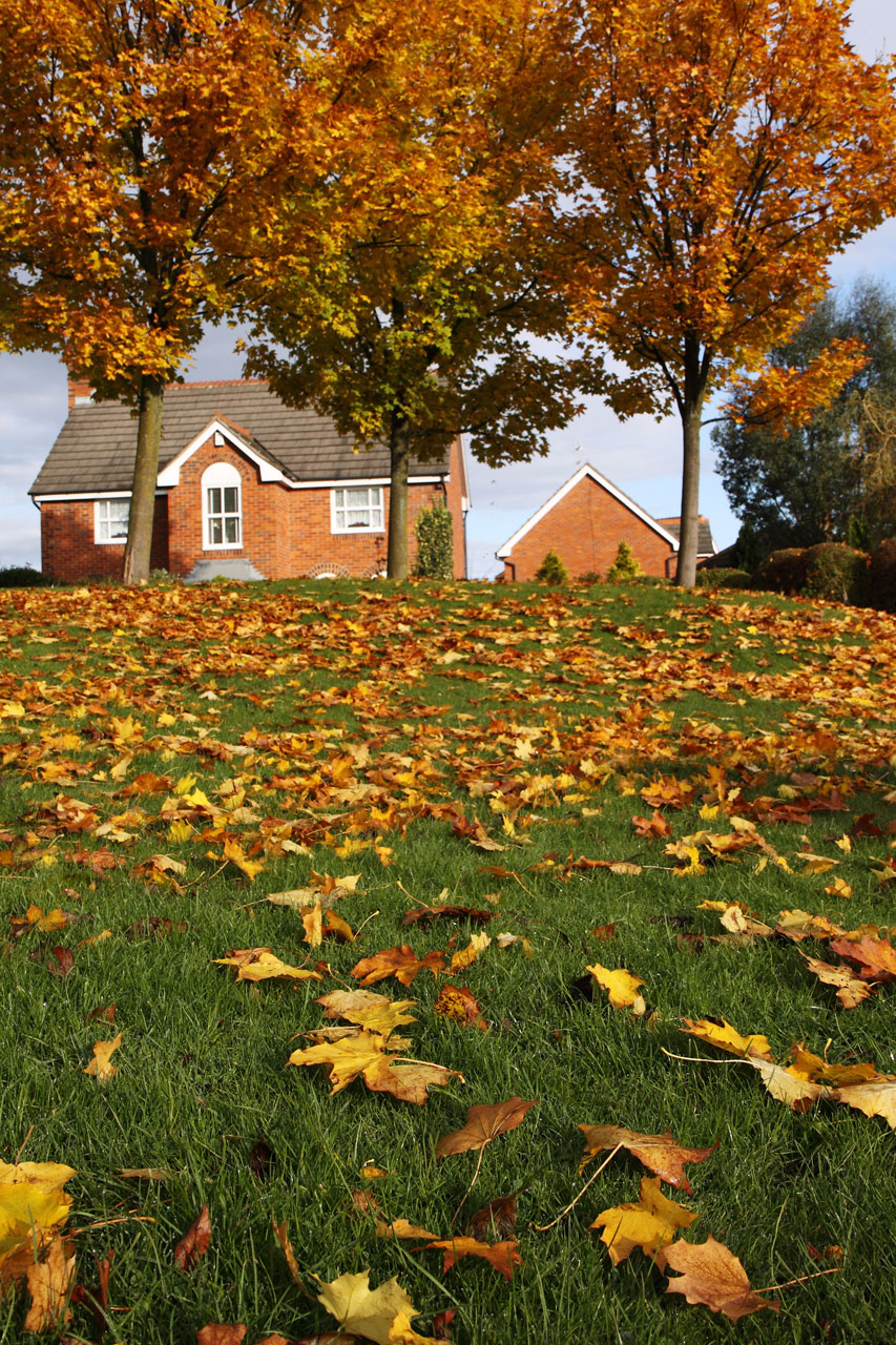 A house surrounded by autumn foliage : Free Stock Photo