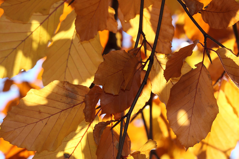 Red, orange and yellow autumn leaves on a tree : Free Stock Photo