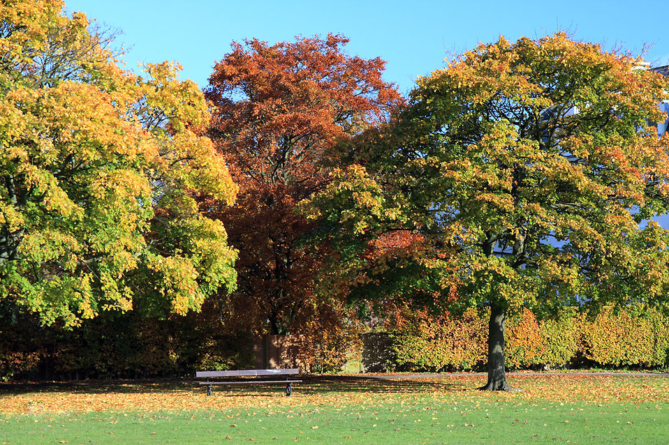 Colorful autumn leaves on trees : Free Stock Photo