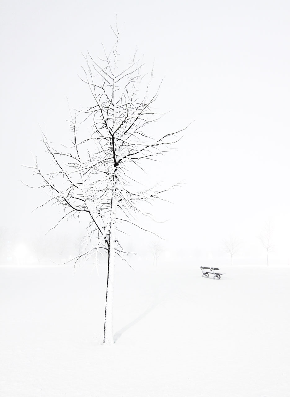 A tree and a bench covered in snow : Free Stock Photo