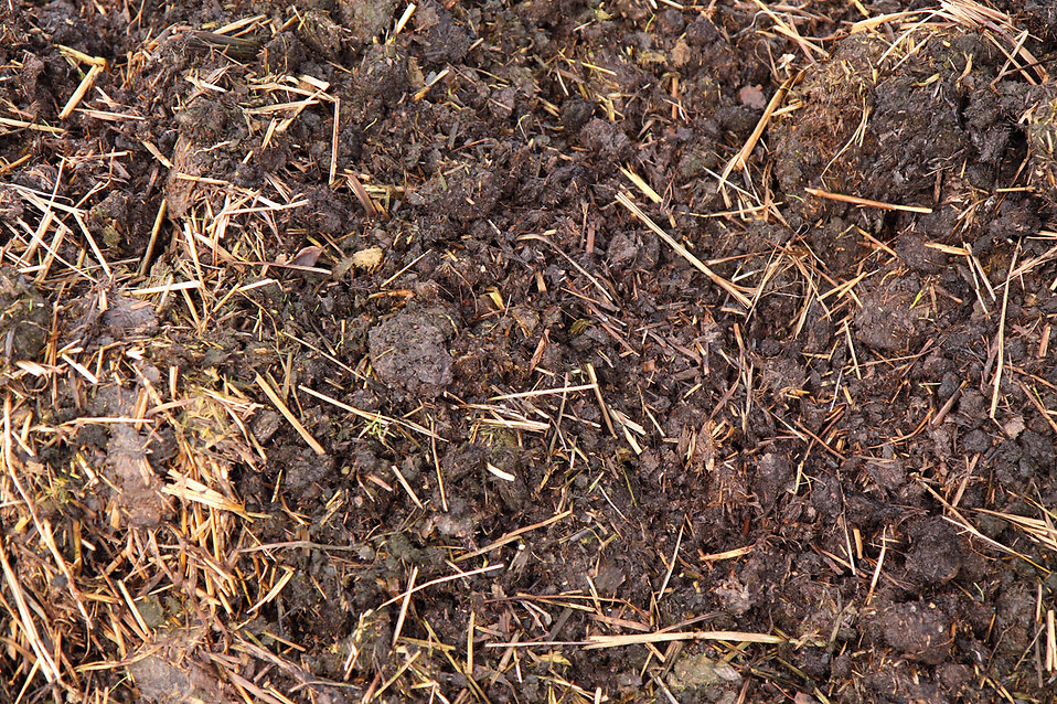 Manure fertiliser : Free Stock Photo