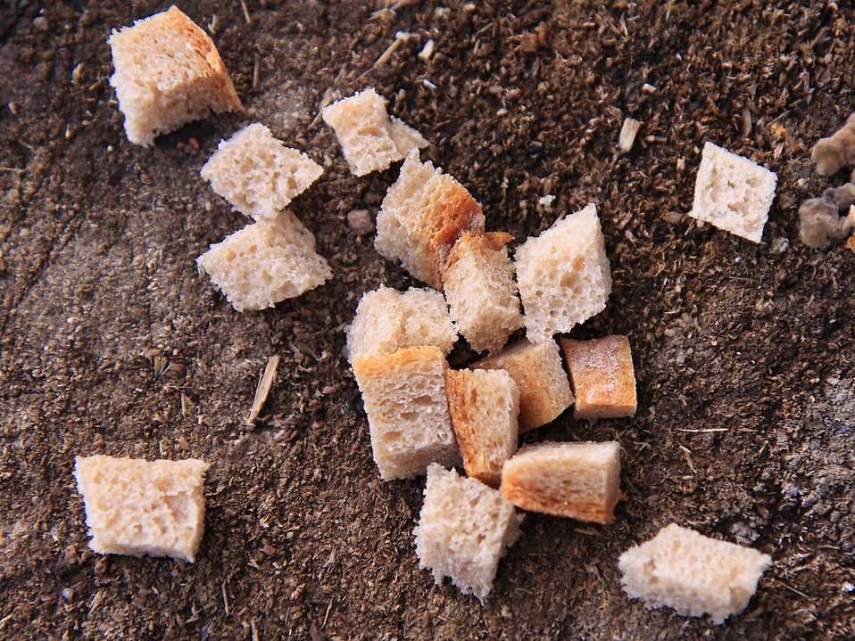Bread crust pieces on the ground : Free Stock Photo