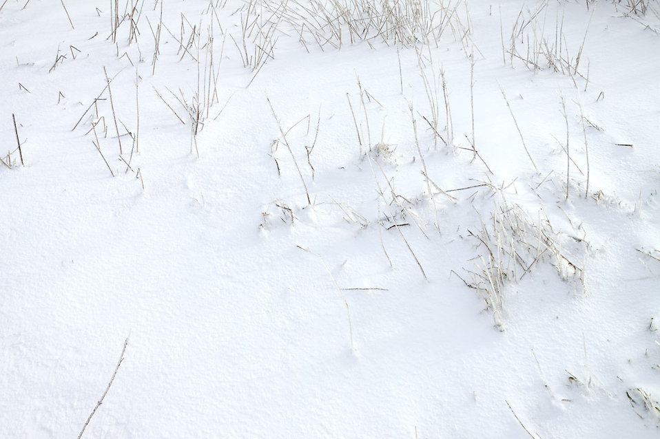 Snow on the ground : Free Stock Photo