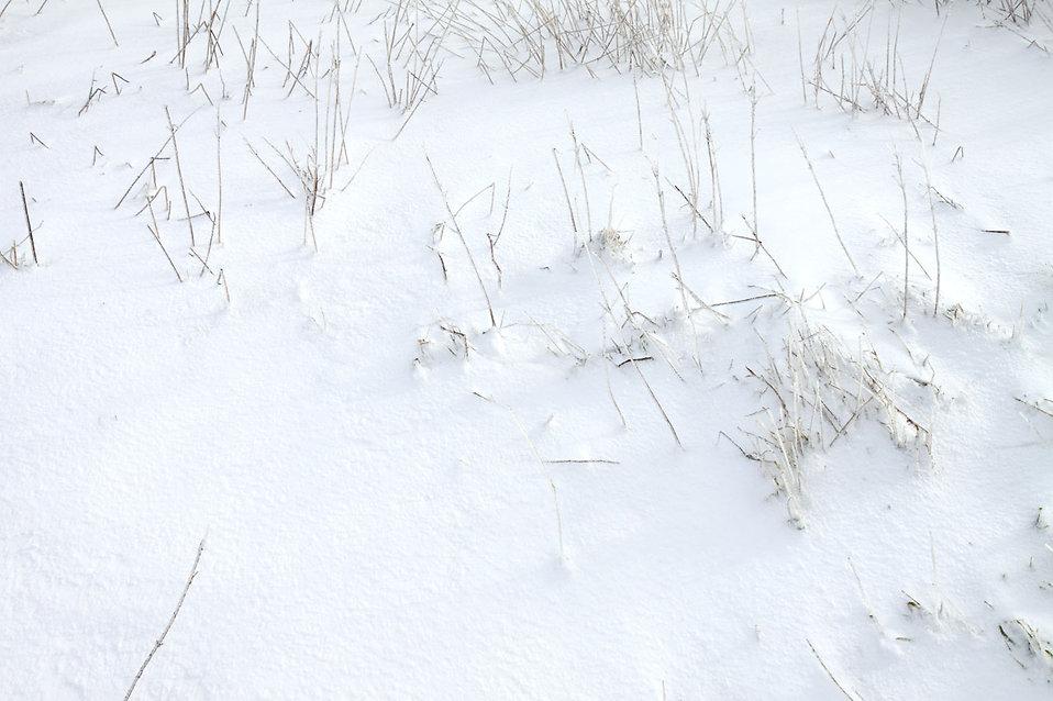 Snow on the ground : Free Stock Photo
