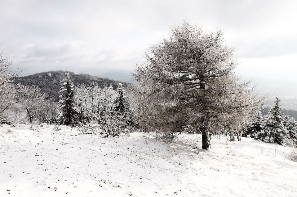A tree in a winter landscape : Free Stock Photo