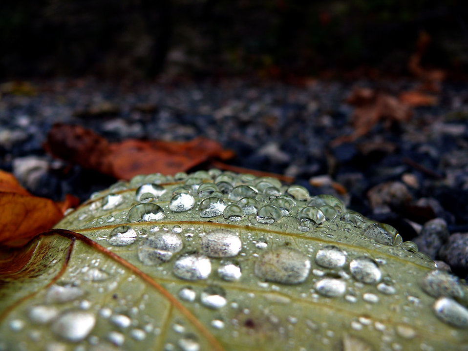 Drops of rain on a leaf : Free Stock Photo