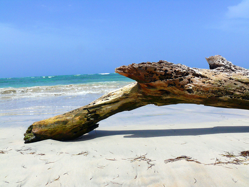 Wood on the beach : Free Stock Photo