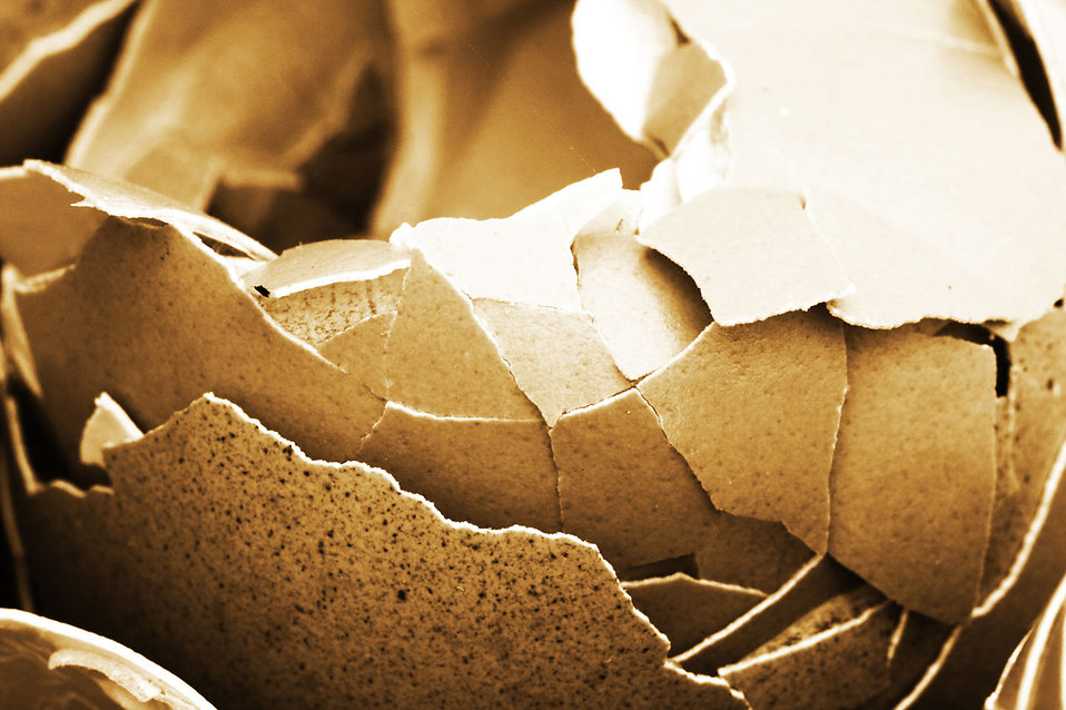 Broken egg shells : Free Stock Photo