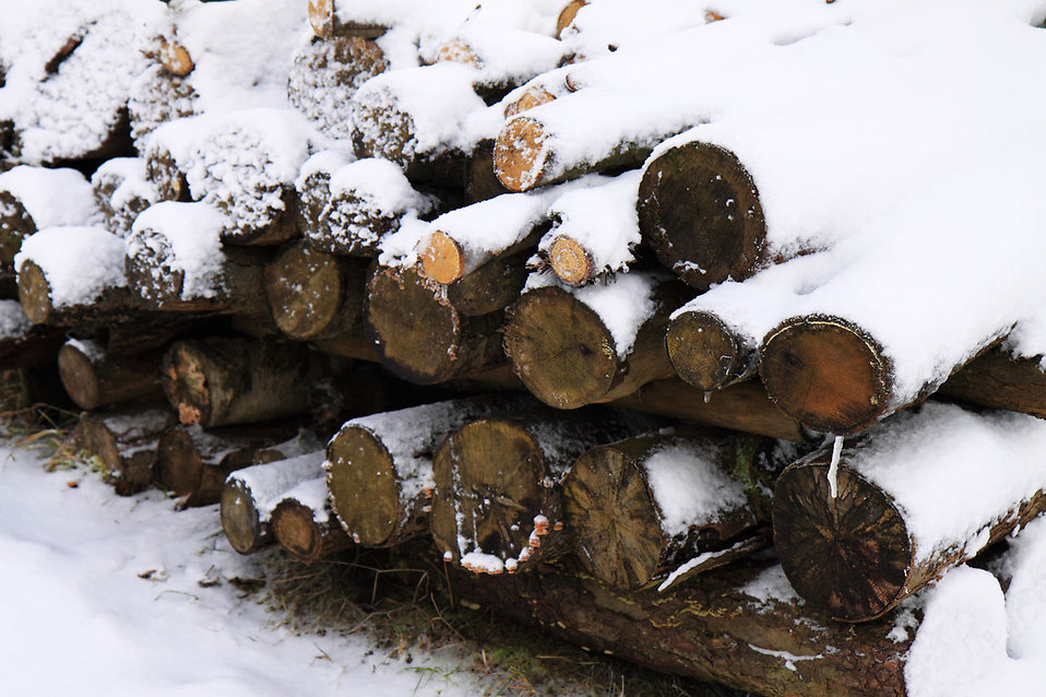 Firewood covered in snow : Free Stock Photo