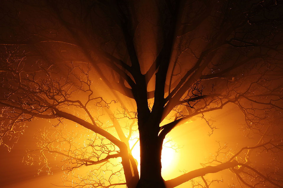A tree in fog at night : Free Stock Photo