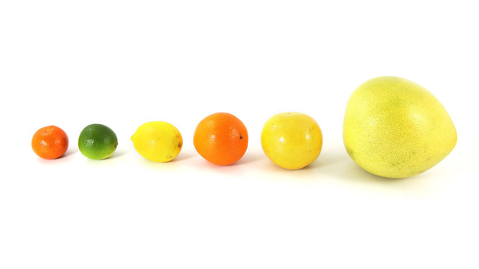 Citrus fruit in a line isolated on a white background : Free Stock Photo