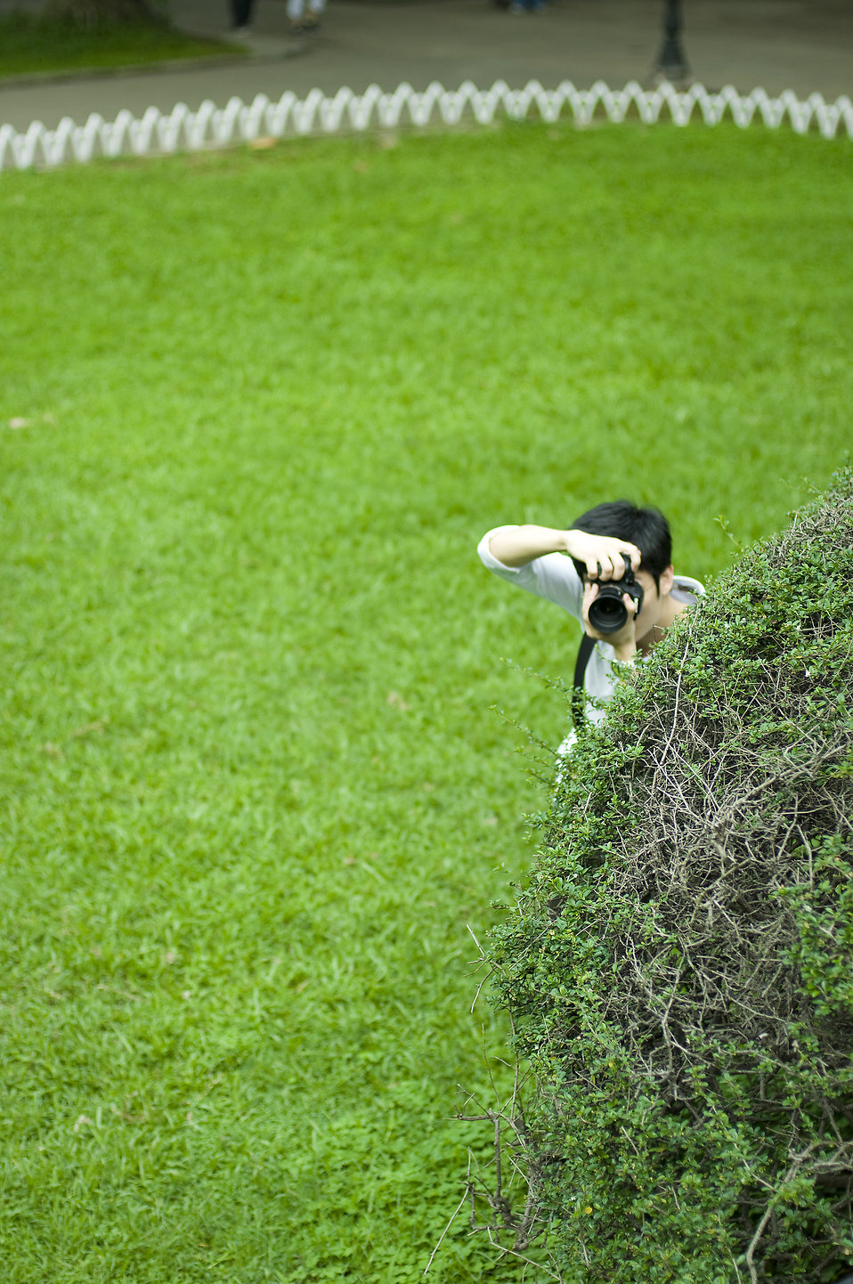 A cameraman taking a picture from behind a bush : Free Stock Photo