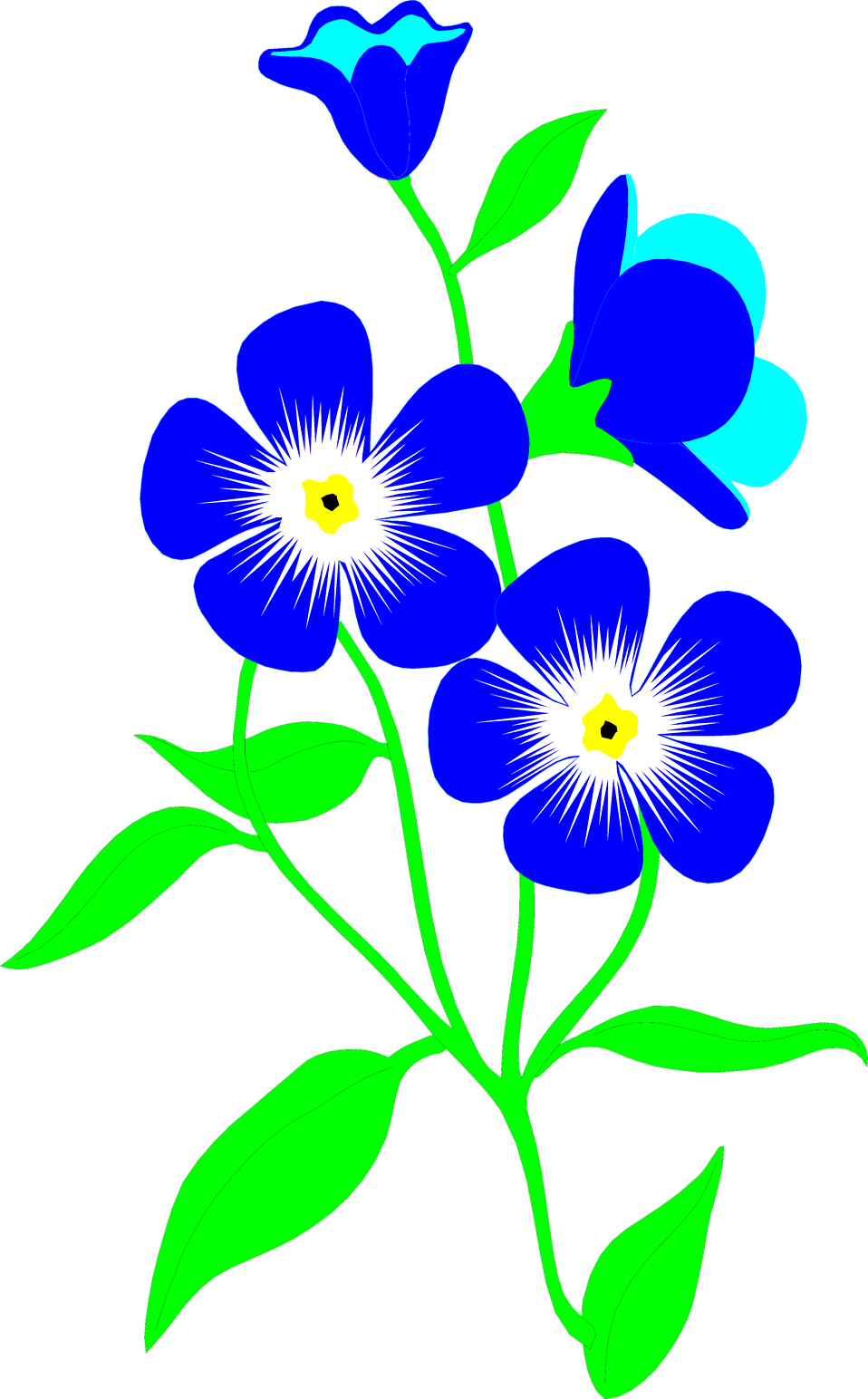 Illustration of blue forget-me-not flowers : Free Stock Photo