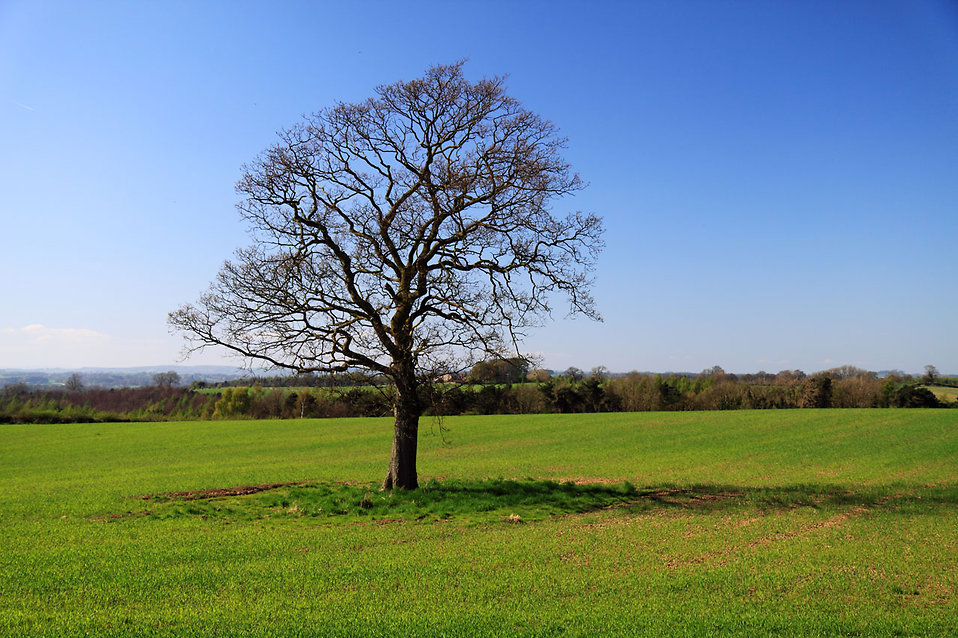 A lonely single tree in a field : Free Stock Photo
