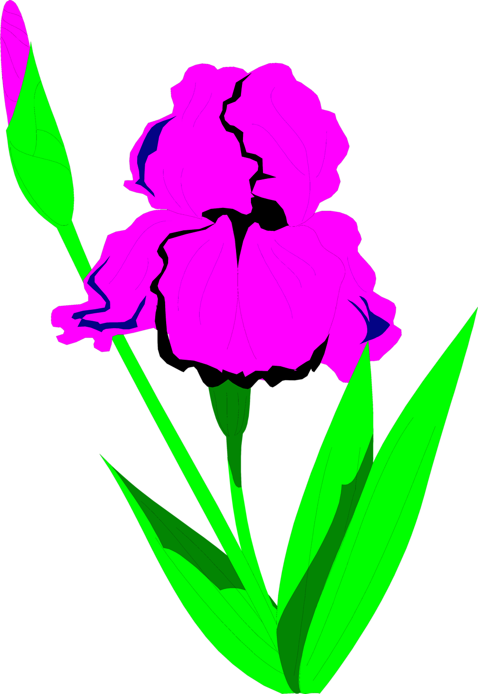 Illustration of a purple iris flower : Free Stock Photo