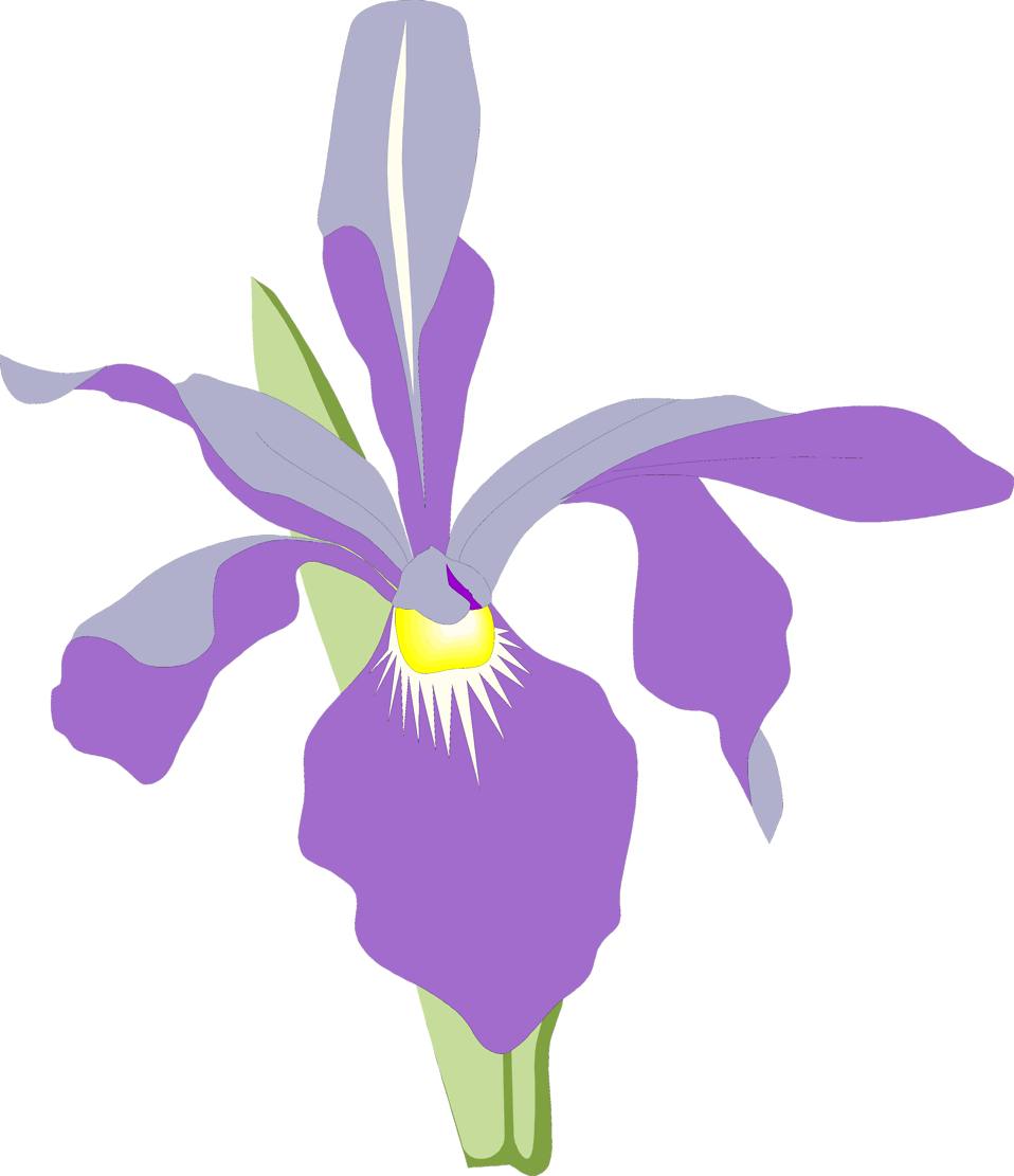 Illustration of a purple orchid flower : Free Stock Photo