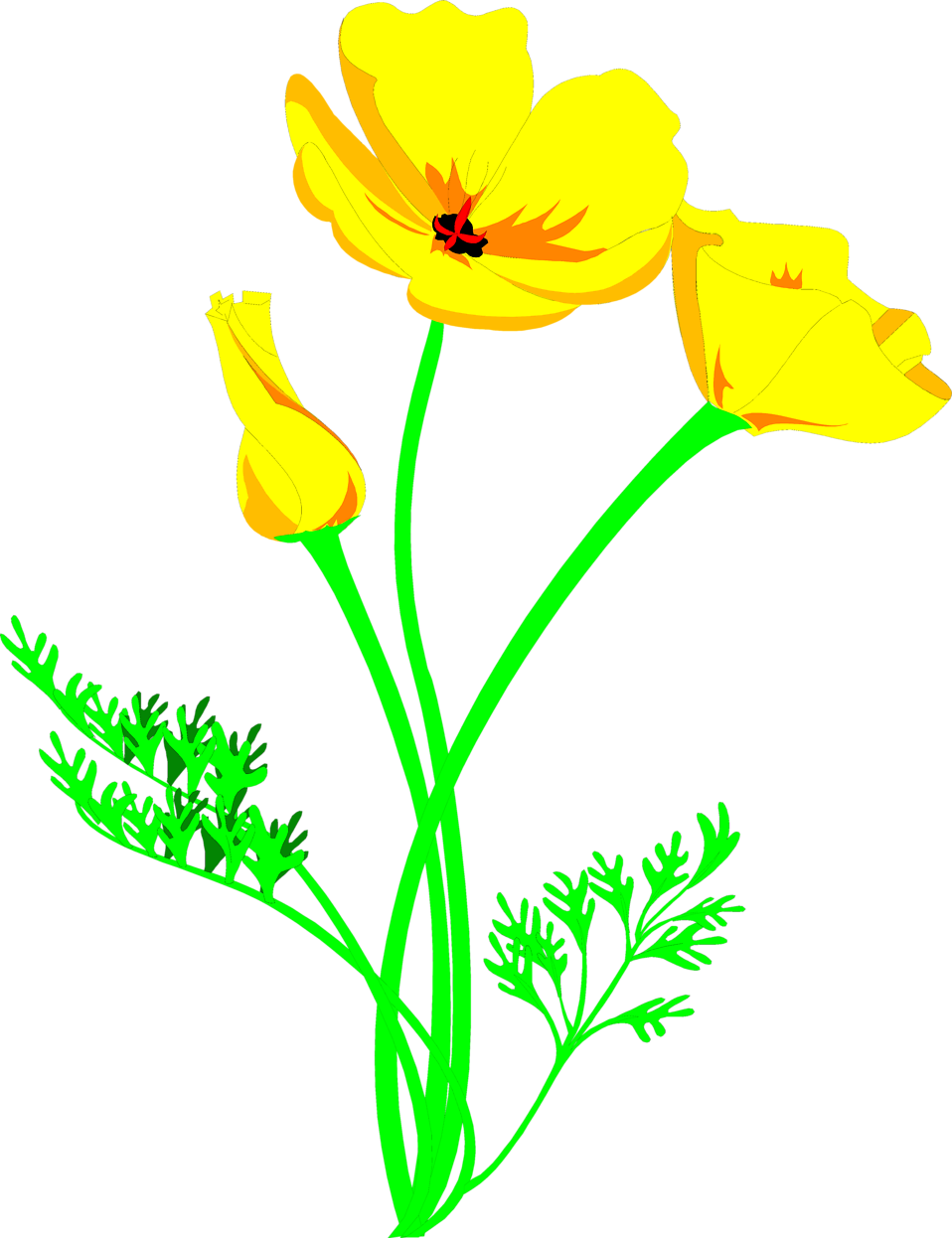 Poppies Free Stock Photo Illustration Of A Golden Poppy Flower