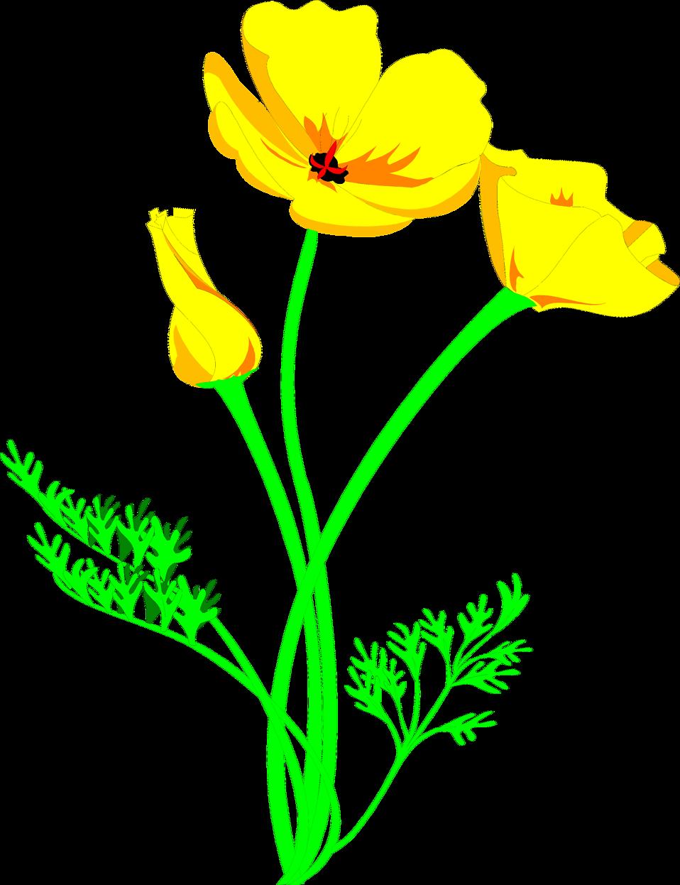 Illustration of a golden poppy flower : Free Stock Photo