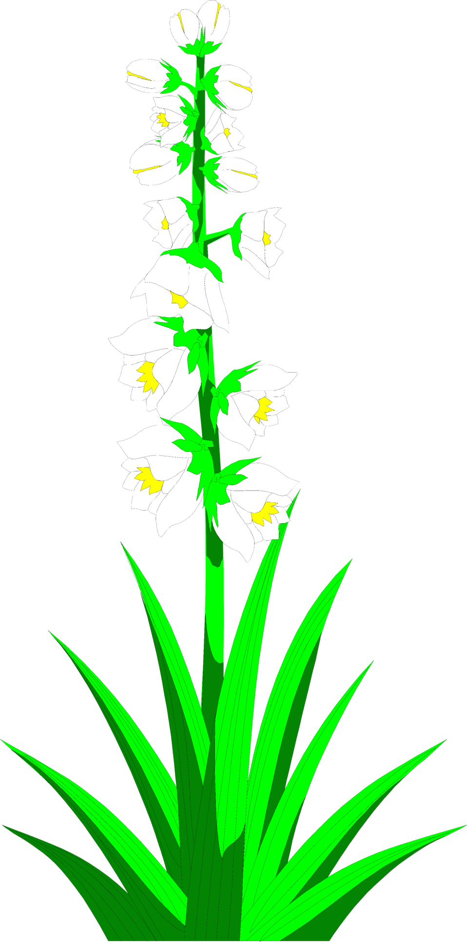Illustration of white yucca flowers : Free Stock Photo
