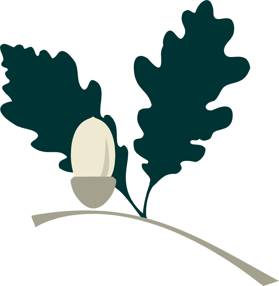 Illustration of an acorn on a branch : Free Stock Photo