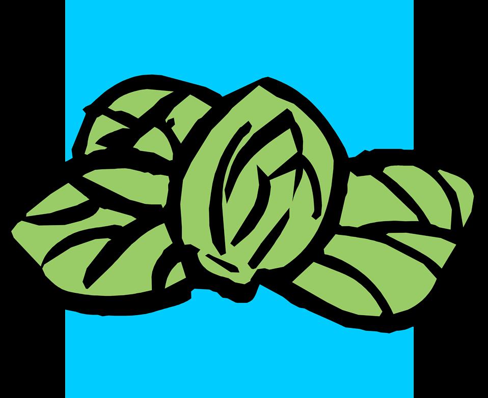 Illustration of of green acorns : Free Stock Photo