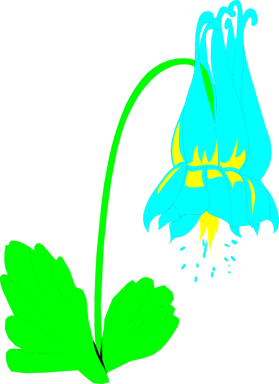 Illustration of a blue columbine flower : Free Stock Photo