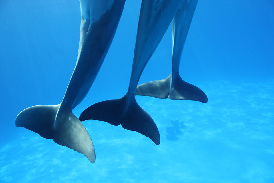 Dancing dolphin tails : Free Stock Photo