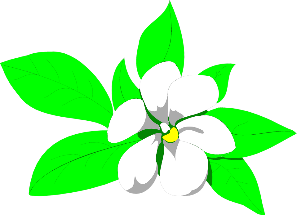 Illustration of a white magnolia flower : Free Stock Photo