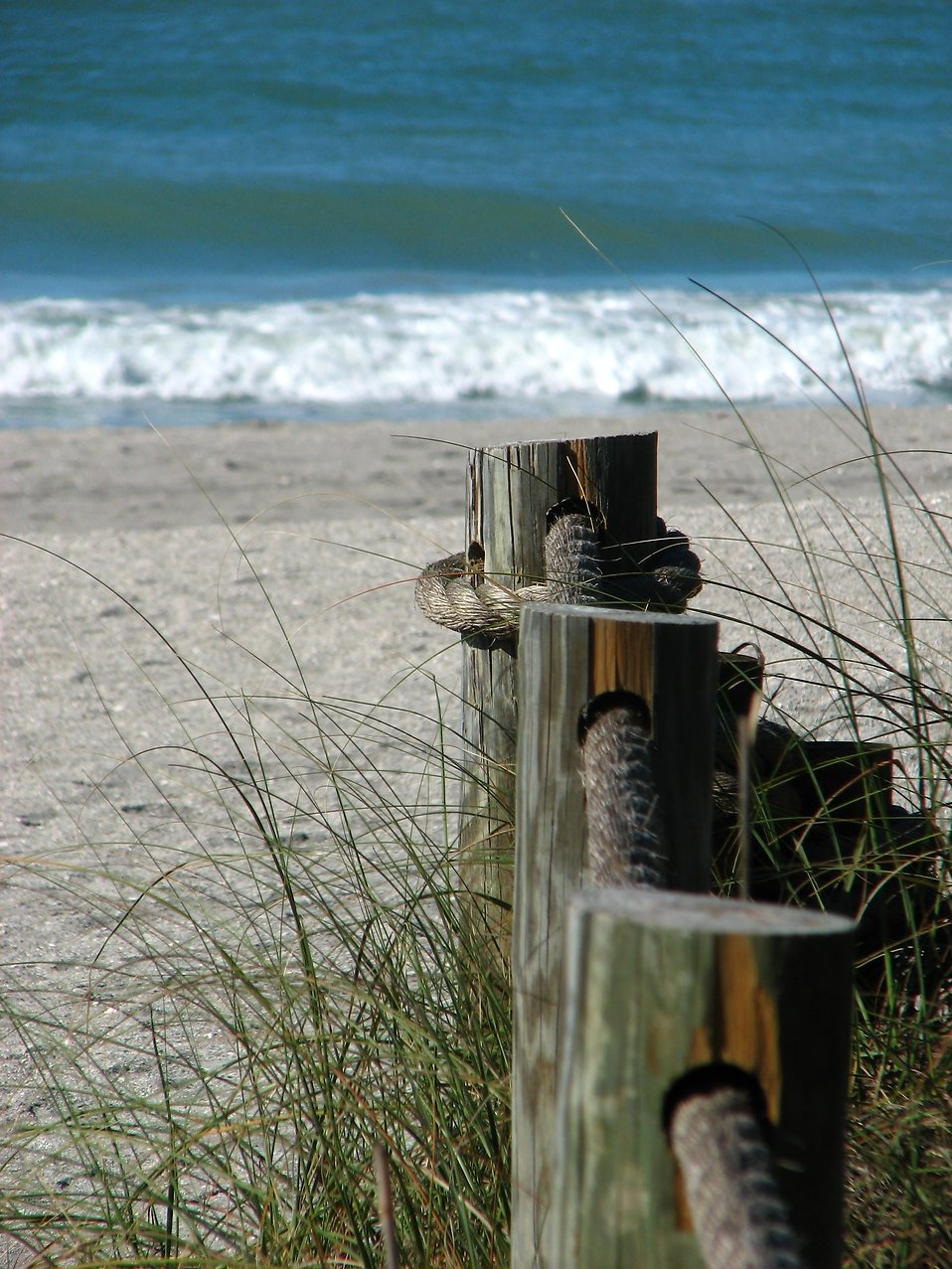 Wooden posts along a path heading towards the ocean : Free Stock Photo