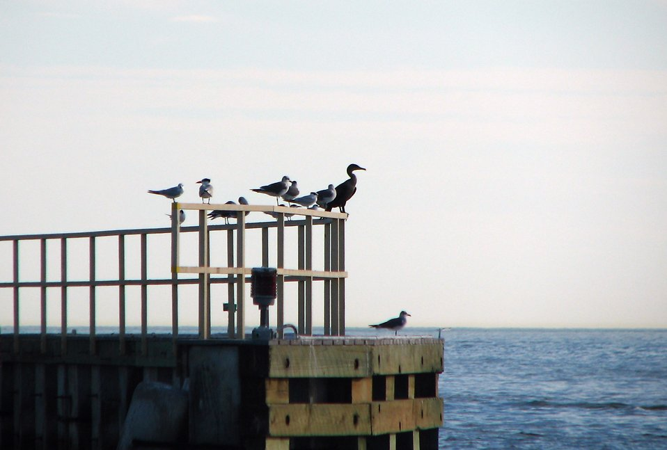Sea birds perched on a railing by the ocean : Free Stock Photo
